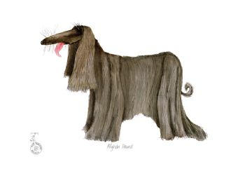 Fun Dog Art Print - Afghan Hound
